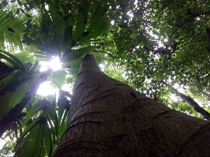 Tall Tree Love The Nature <3 Ray Of Light Shades Of Leaves Clean And Green