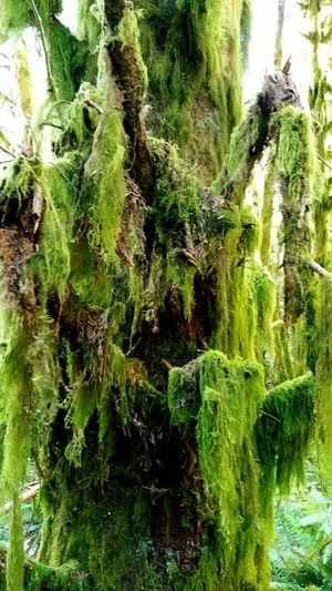 Green mossy