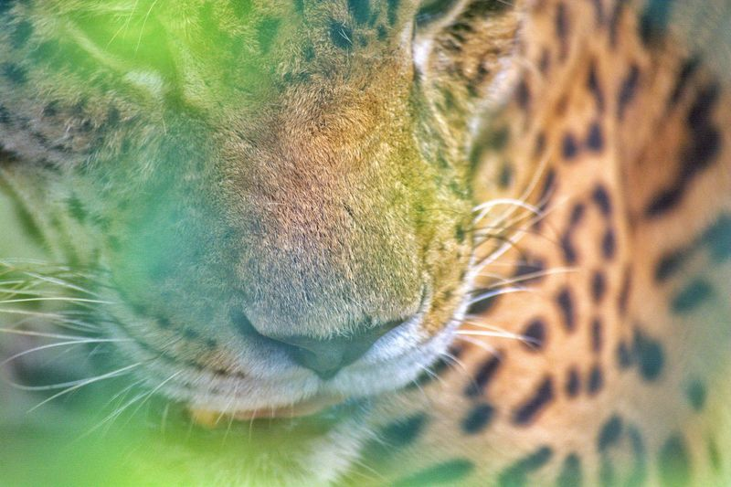 Tiger Tiger Animal Themes Animals In The Wild Animal Wildlife Animal Wildlife Nature Hiding Backgrounds Full Frame Close-up Petal