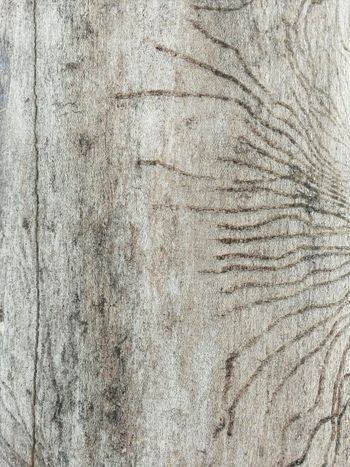 Bark of tree Bark Texture Bare Tree Brown Brown Texture Backgrounds Nature Abstract Pattern Paper Indoors