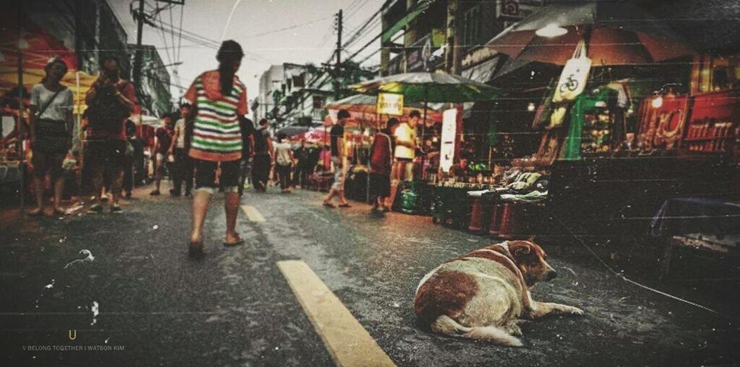 What a good trip!! Chiang Mai | Thailand Goodday On The Ground Pet Dog People Taking Pictures Popular Photos Mommy Market