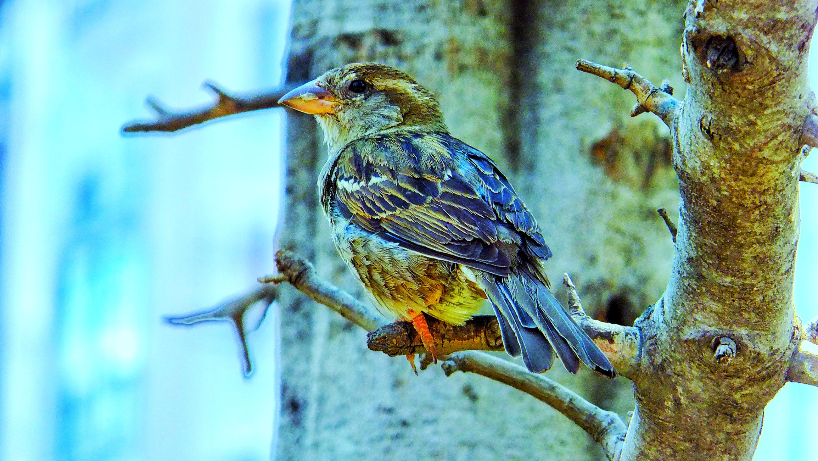 bird, animal themes, animals in the wild, animal wildlife, perching, nature, one animal, no people, outdoors, close-up, day