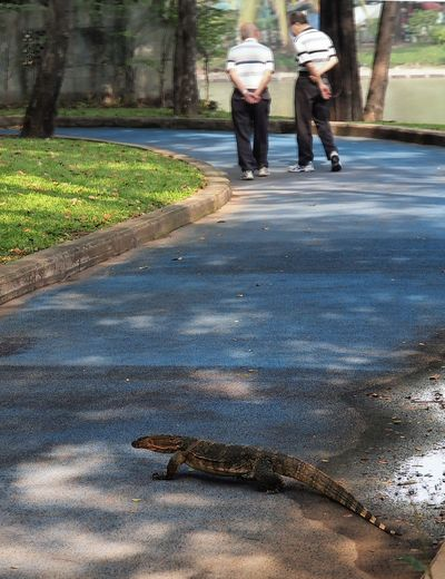 It isn't only humans who like a relaxing stroll in the park... Bangkok Lizard Lumphini Park Thailand Day Nature One Animal Outdoors People Plant Real People Reptile Tree Water Water Monitor Women