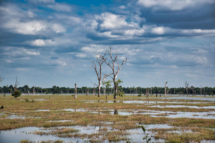 Scenery view of a lake with dead trees around neak poan temple in cambodia