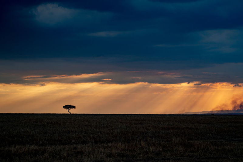 Tree Cloud - Sky Field Growth Horizon Horizon Over Land Land Landscape No People Orange Color Outdoors Safari Safari Adventure Safaripark Scenics - Nature Sky Sunset Tranquil Scene