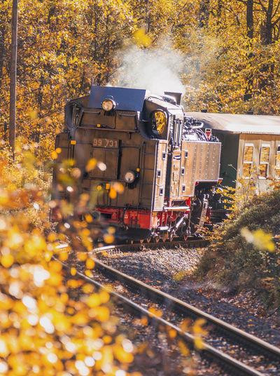 Train on railroad track during autumn
