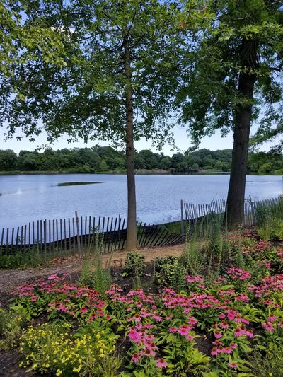 Flower Water Growth Tree Nature Beauty In Nature Lake No People Grass Sky Landscape Tranquility Scenics New Jersey