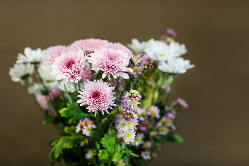 Flowers Flowering Plant Flower Plant Freshness Fragility Vulnerability  Beauty In Nature Flower Head Pink Color Petal No People Day Flower Arrangement Bouquet Nature Close-up Focus On Foreground Bunch Of Flowers Bunch Celebration Festive Growth Selective Focus