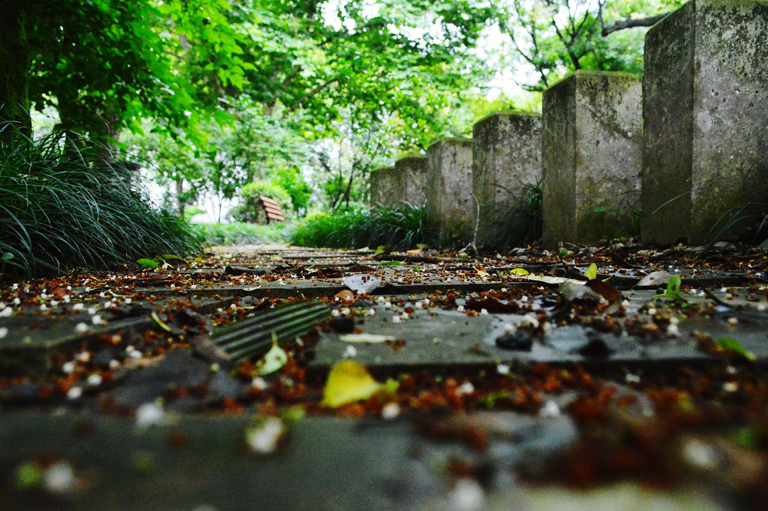 tree, surface level, selective focus, stone - object, built structure, tranquility, nature, growth, railroad track, the way forward, forest, stone, day, architecture, outdoors, no people, rock - object, tranquil scene, focus on background, leaf