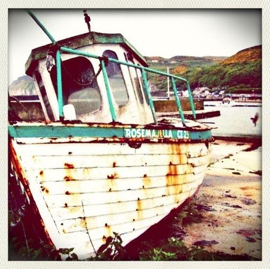 Bird Boats Rustygoodness