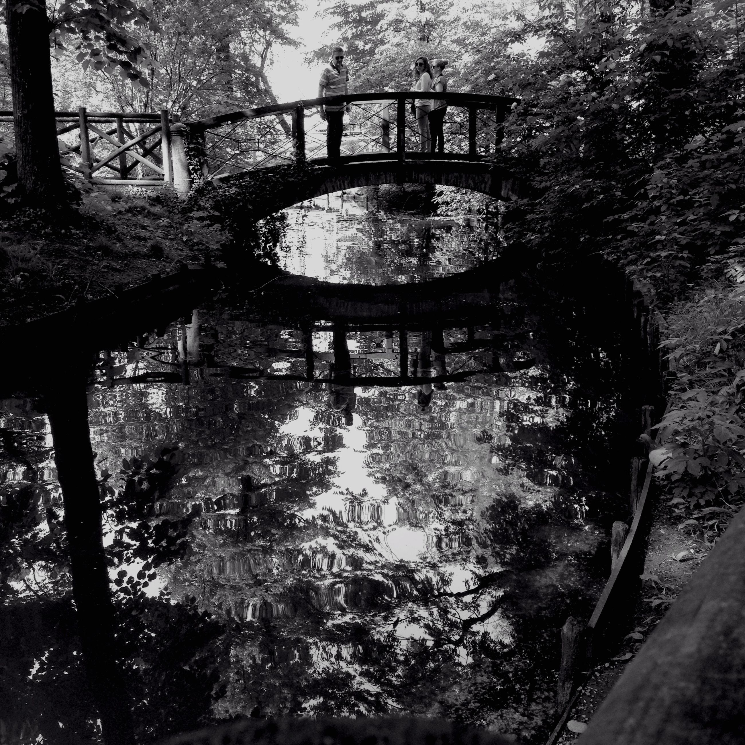 tree, water, bridge - man made structure, tranquility, reflection, branch, river, tree trunk, nature, connection, tranquil scene, forest, footbridge, growth, railing, park - man made space, beauty in nature, lake, sunlight, day