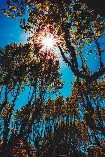 Beauty In Nature Blue Blue Sky Branch Day Flower Growth Leaves Low Angle View Nature No People Outdoors Sky Spring Springtime Sun Sunflare Sunlight Sunlight Sunrays Tranquility Tree Tree