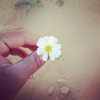 زهرة القحويان?