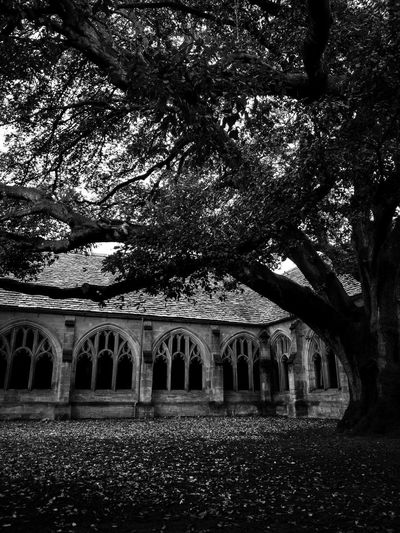 Books and Stones 13: Ancient Oak. Don't miss the series: Passage University Hallway Leaves Leaves Falling Books And Stones Be Quiet Old Blackandwhite Bnw_collection monochrome photography Monochrome Oak Ancient Black White Abbey Plants Dark Cathedral Tree Arch Architecture Built Structure Building Exterior Monastery Weathered