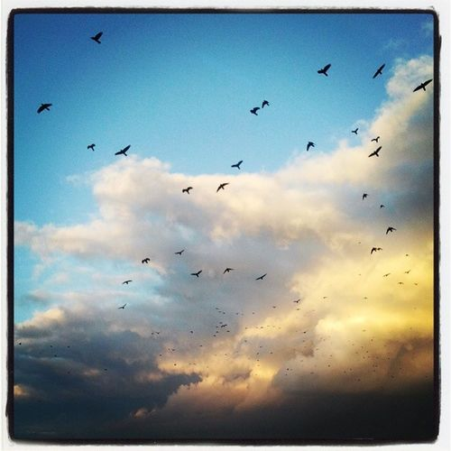The last day of the fall Instamood Myphoto Homesweethome Birdsflyingaway skyisbeautiful lovethispic warm sunnyday instagram