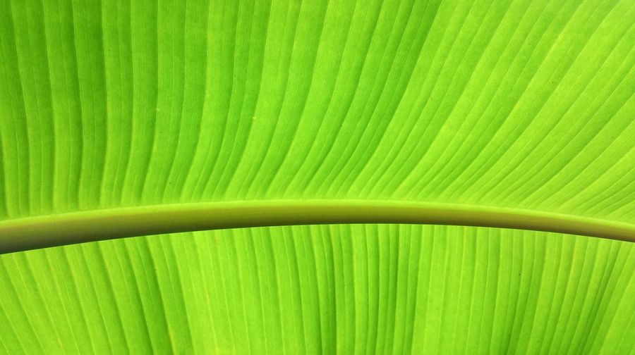 Green Color Leaf Beauty In Nature Taking Photos Puerto Rico