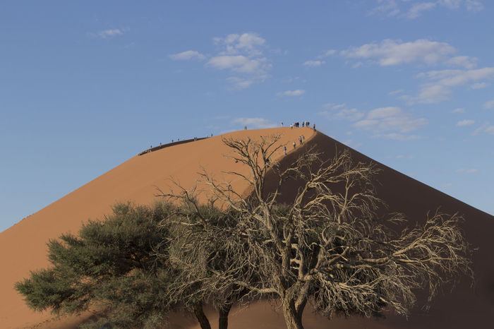 Architecture Beauty In Nature Building Exterior Built Structure Day Growth Low Angle View Namib Desert Namib Dunes Namibia Namibia Landscape Nature No People Outdoors Sky Tree