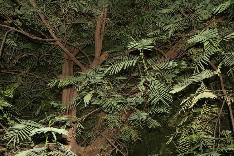 Full frame shot of leaves on tree