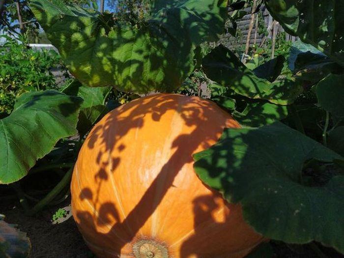 High angle view of pumpkin on ground