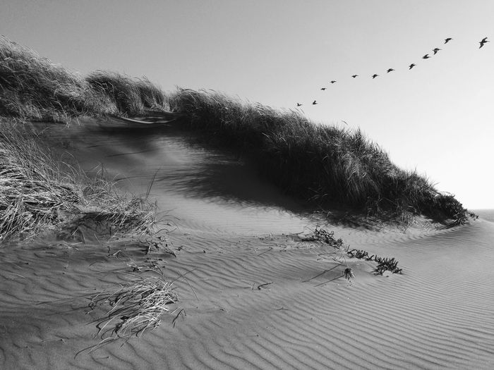 What Does Peace Look Like To You? Blackandwhite NEM Black&white Beach