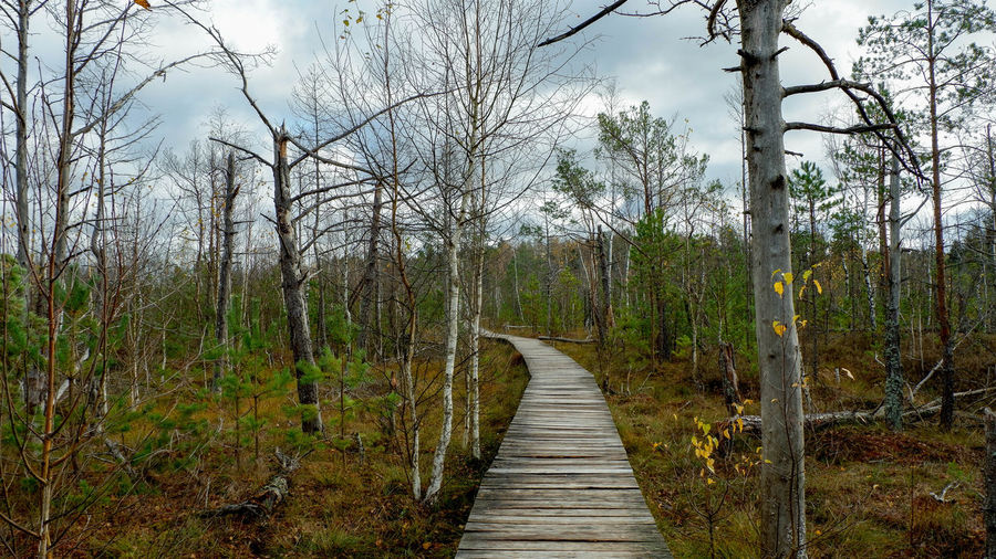 Tree Plant Direction Forest Land The Way Forward Tranquility Nature Wood - Material No People Day Scenics - Nature Beauty In Nature Sky Outdoors Landscape WoodLand Wood Long Path Dubrava Dubravos Apyrube Rezervatas Peļķe Lithuania