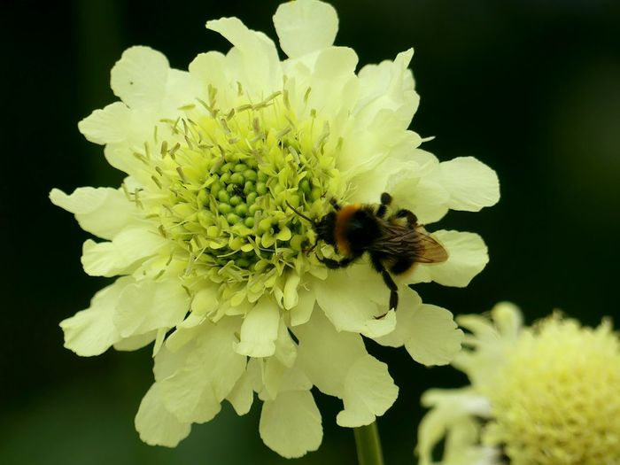 Flower Insect Petal Plant Fragility Nature One Animal Flower Head Animals In The Wild Uncultivated Animal Wildlife Freshness Beauty In Nature Growth No People Close-up Leaf Animal Themes Bee Outdoors