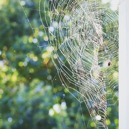 Spider Web Web Focus On Foreground Nature Spider Outdoors Trapped Close-up No People Day Beauty In Nature Survival Intricacy Weaving One Animal Complexity Freshness Animal Themes