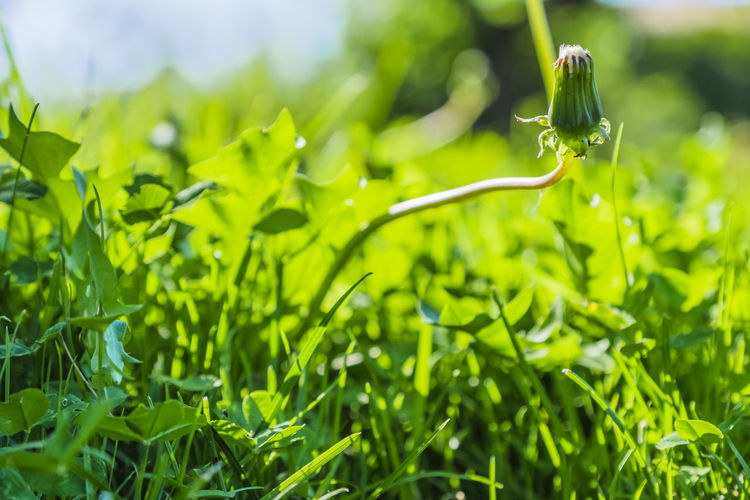 Close-up Green Color Growth Plant Nature Plant Part Beauty In Nature Selective Focus Leaf No People Field Day Land Outdoors Focus On Foreground Grass Sunlight Freshness Tranquility Drop Blade Of Grass