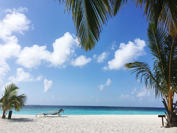 Heaven on earth White Sand Beach White Sand Palm Tree Honeymoon Maldives Ocean View Ocean Simplicity Peaceful Happiness Beach Water Sky Sea Land Tree Cloud - Sky Horizon Over Water Scenics - Nature Tranquil Scene Horizon Tropical Climate Plant Beauty In Nature Sand Nature Day Palm Tree Tranquility Outdoors