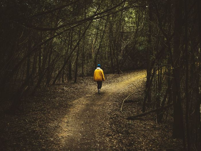 Woods One Person Walking Real People Outdoors Full Length Lifestyles Tree People Yellow Jacket Panasonic Lumix Dmc-gx85 Lumix Visual Visual Statements Visualsoflife Visualsgang Visualpoetry Art Portugal Portugaldenorteasul Portugaligers Portugalcomefeitos Sintra Sintra (Portugal) Sintraalive