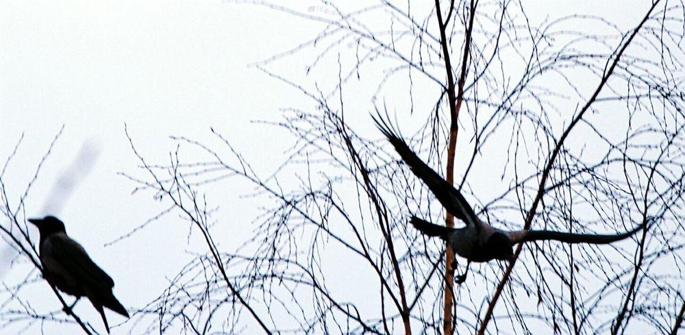 Flyingbirds birds