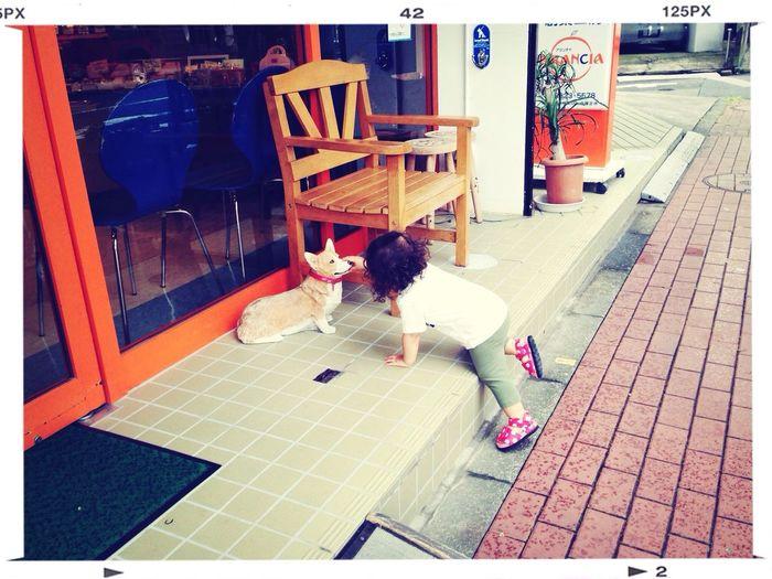 散歩コースの途中の洋菓子屋さんの前の犬の置物に毎度「わんわん!」とテンション上げつつナデナデする図