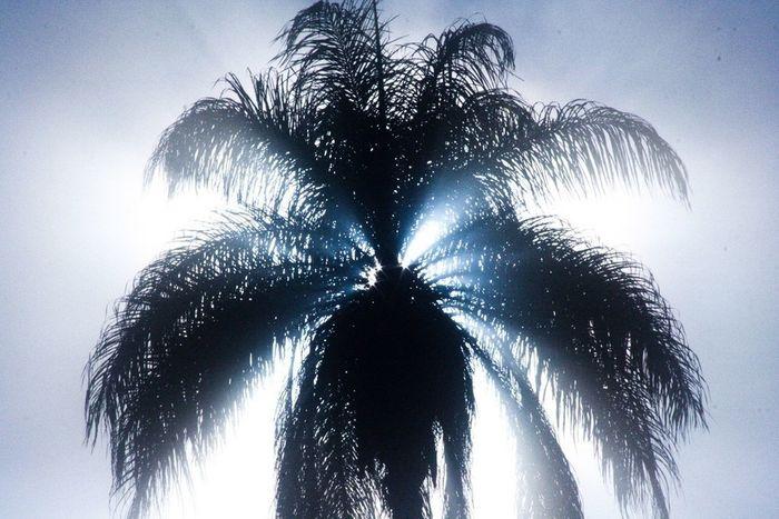 Palm Trees Tree Sun Light Senhora Do Carmo