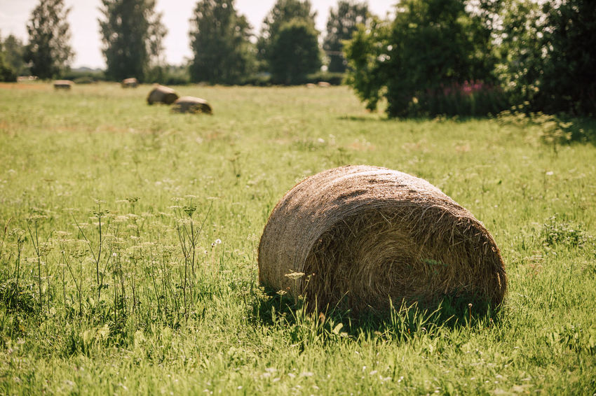 Agriculture Bale  Day Farm Field Focus On Foreground Grass Green Color Hay Land Landscape Nature No People Outdoors Plant Rolled Up Rural Scene Tranquil Scene Tranquility Tree