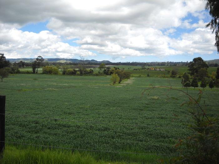paisaje clombiano
