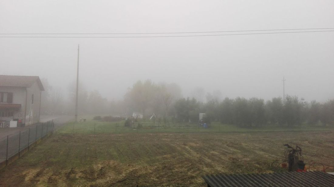 Fog Weather Tree Nature Agriculture Rain Beauty In Nature Tranquility Landscape Outdoors Day No People