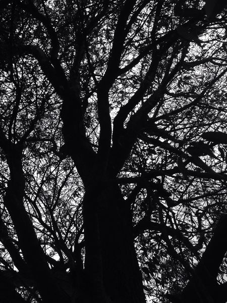 Showcase March Landscape Trees Taking Photos Memories Sky