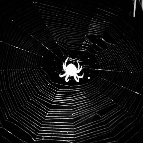 Spider.. First Eyeem Photo