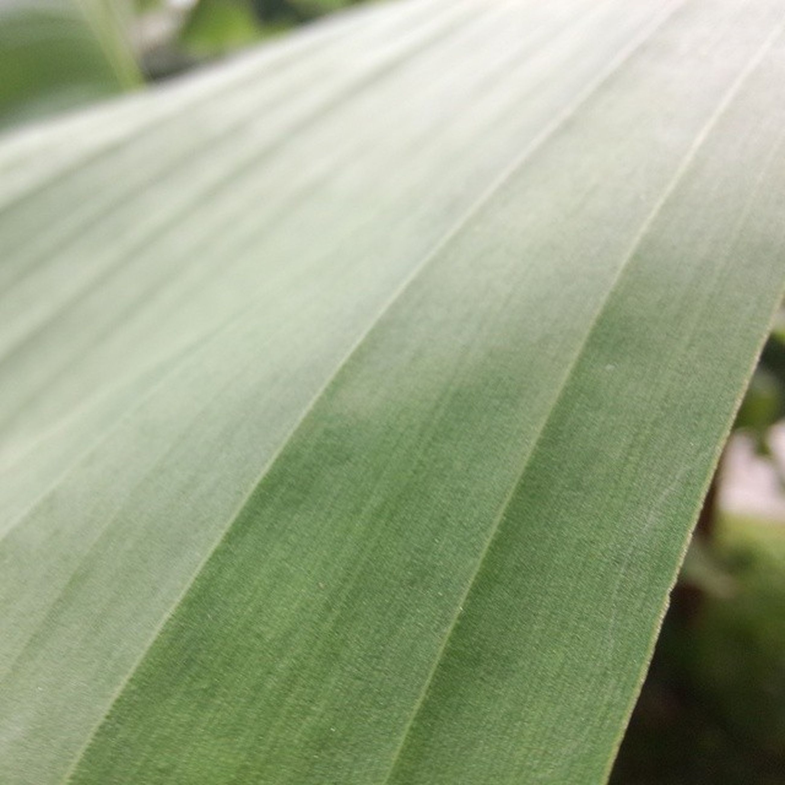 close-up, growth, leaf, focus on foreground, nature, green color, plant, beauty in nature, selective focus, freshness, day, fragility, no people, outdoors, natural pattern, sunlight, leaf vein, macro, green, pattern