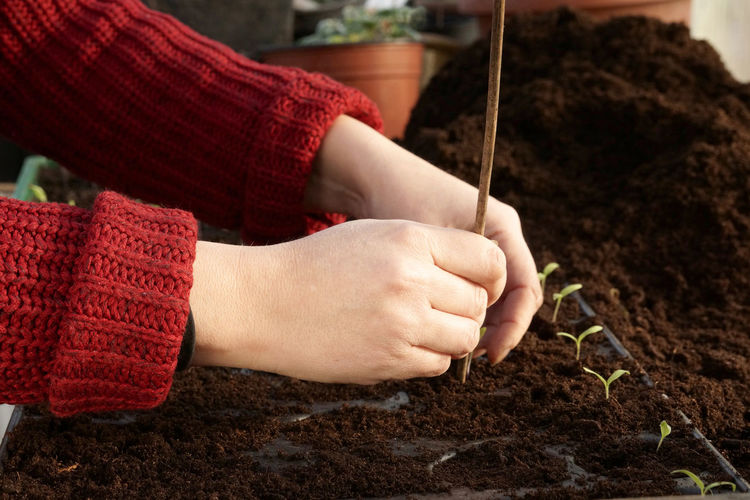 Planting tomato seedlings Close-up Detail Focus On Foreground Gardening Greenhouse Human Body Part Human Hand Part Of Planting Real People Seedlings Unrecognizable Person