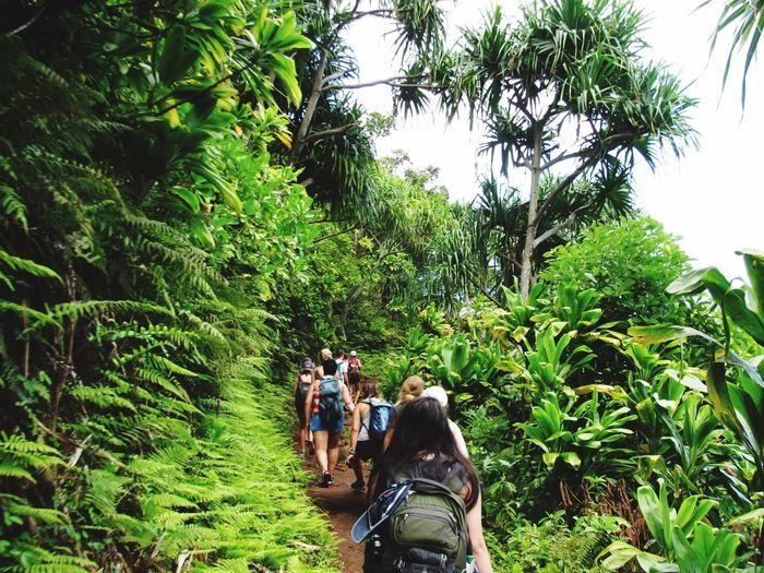 Kauia Bananas Hawaii Hanalei Hikes First Eyeem Photo Squad Slippery Muddy Worth Sport Color Of Sport