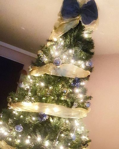 Is it too early to put up the Christmas tree? 😊😃🎄 Christmastree Christmas November December Festive Feelingfestive Tree MerryChristmas Happychristmas Myholidayspark Holidays Festiveseason