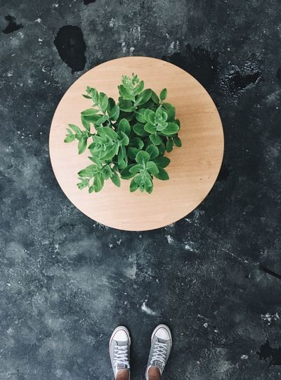 Directly Above High Angle View Leaf One Person Human Body Part Shoe Human Leg Standing Growth Low Section Indoors  Real People Close-up Day Freshness People Adult