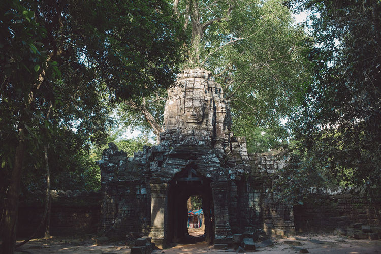 Siem Reap Cambodia Angkor Tree Plant Religion Architecture Built Structure Belief Spirituality Place Of Worship Building History Nature Day The Past Ancient Growth Travel Building Exterior No People Outdoors Ancient Civilization