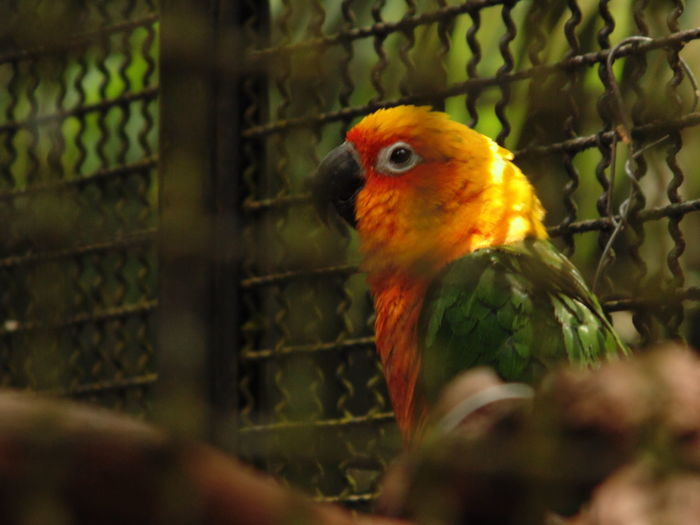 Animal Themes Animals In Captivity Bird Cage Close-up One Animal Parrot Zoo Animals
