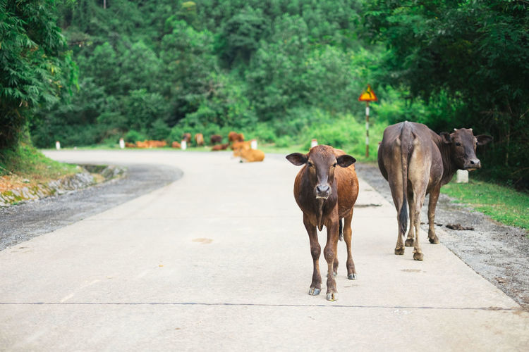 Horses on road by trees