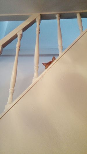 Catsears Hello Stairs Looking Up Lookforme Hide And Seek Cats Of EyeEm Cat Lovers Catsagram