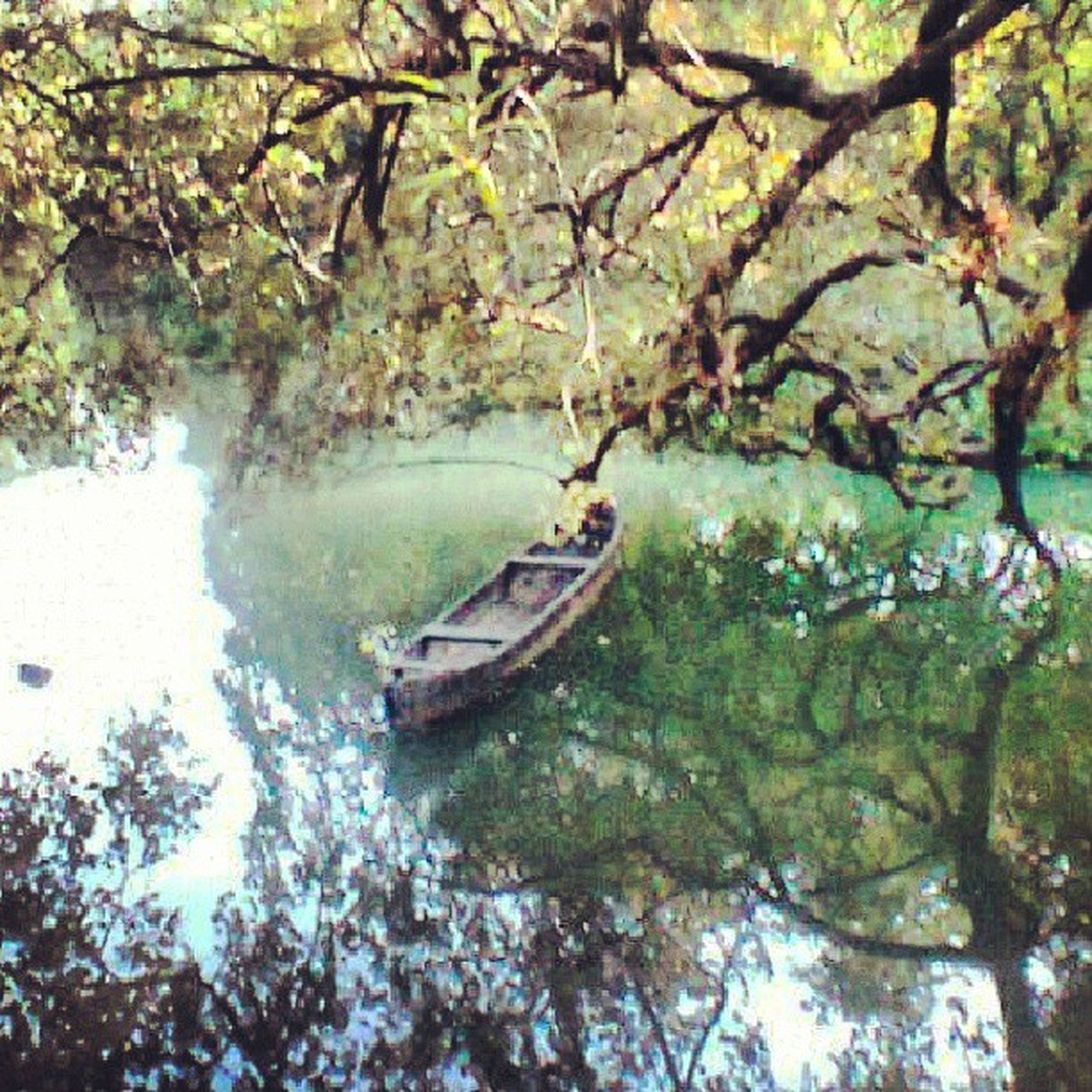 tree, water, branch, lake, nature, tranquility, reflection, beauty in nature, tranquil scene, boat, growth, nautical vessel, green color, day, river, transportation, forest, outdoors, waterfront, scenics