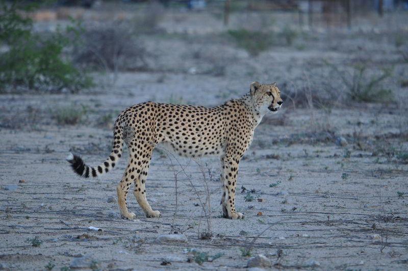 Africa Animal Desert Life Namibia Nature Nature Safari Wildlife