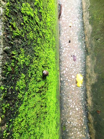 Moss and insect at drain Beautiful Moss Moisture Moss Small Insect On Drain Green Color Plant High Angle View Grass Nature Day Sunlight Park No People Land Field Footpath Growth Flowering Plant Directly Above Beauty In Nature Outdoors Flower City Vertebrate